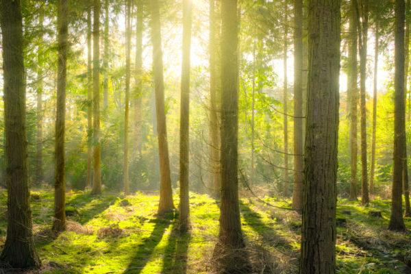 Slika gozda