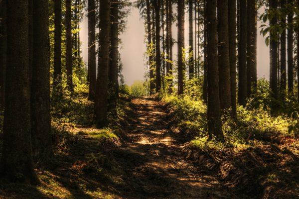 Gozdne steze